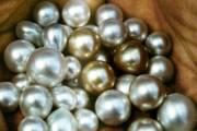 DOCTOR HOUSE, Le 'perle' dell'assessore Arru su riforma sanitaria ed incursioni politiche
