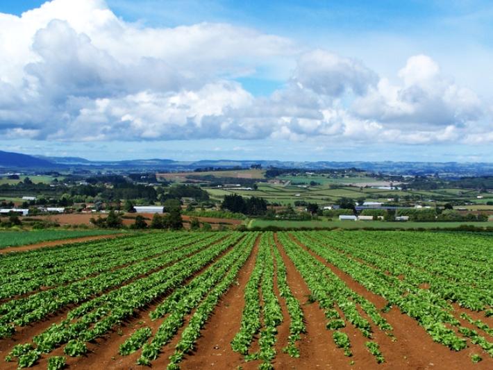"""REGIONE, Cossa (Riformatori): """"Ue boccia il piano sull'agricoltura della Giunta Pigliaru. Figuraccia di un manipolo di baroni allo sbaraglio, Sardegna rischia di perdere oltre 1 miliardo"""""""
