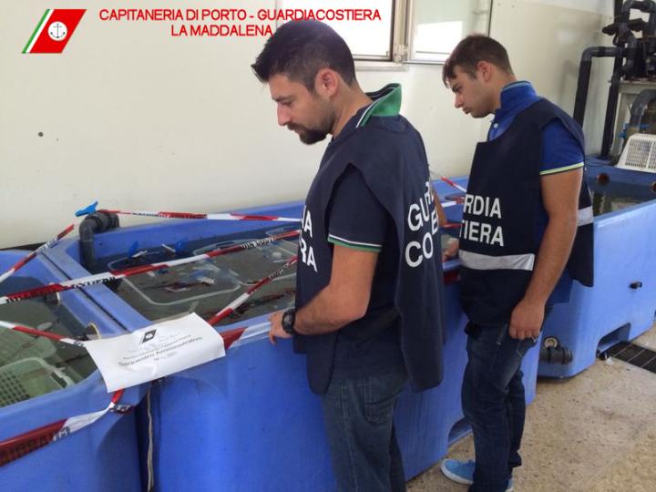 LA MADDALENA, Controlli della Capitaneria sulla filiera della pesca. sequestrati 27 esemplari di dattero di mare e multe per oltre 30.000 euro