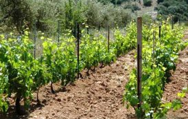 Argea, Laore e Agris: tre enti per l'agricoltura. Meglio accorparli in una sola cabina di regia (Giorgio Fresu)