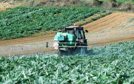 """AGRICOLTURA, Cicu (Ppe): """"Inaccettabile l'imposizione della Commissione europeanel sostegno ai prodotti dell'Ucraina"""""""
