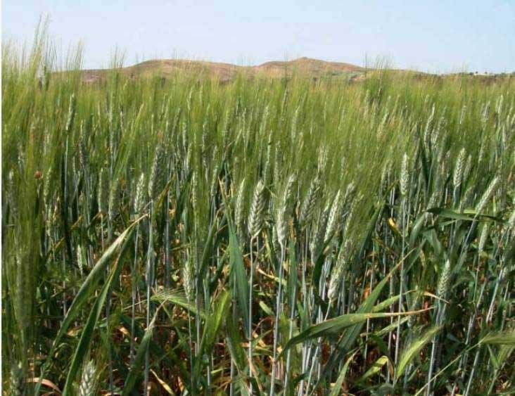 agricoltura15