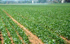 IL GIARDINIERE, Spreco agricolo: abbiamo strumenti per produrre frutta e verdura che consumiamo