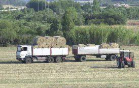 IL GIARDINIERE, La fatica agricola è sottopagata