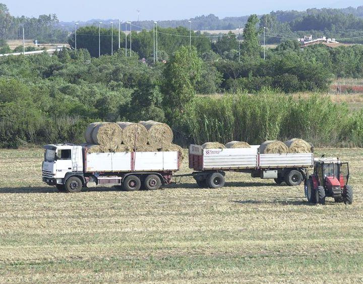 """AGRICOLTURA, Assessore Falchi: """"Nessuno scaricabarile"""". Opposizione accusa: """"Giunta snobba agricoltura"""". La Base: """"Sanare ingiustizia"""""""