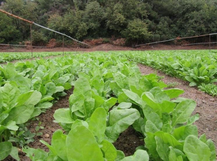 COCHISE, Grazie ai fondi del Piano di sviluppo rurale, nei campi si può andare in pullman…