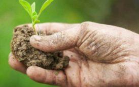 AGRICOLTURA, Cresce il mercato Bio in Sardegna: due seminari per aziende