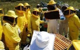 AGRICOLTURA, Clima impazzito, api scombussolate e miele che scarseggia: nell'Isola crollo del 50% della produzione