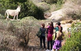ASINARA, Festeggiamenti per i 20 anni del Parco Nazionale: è nato il 28 novembre 1997