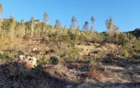 """QUARTU SANT'ELENA, Taglio di alberi nella pineta di Bacca Mandra. Ecologisti: """"E' autorizzato?"""""""