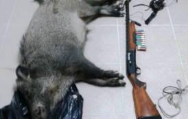 ESCALAPLANO, Caccia notturna al cinghiale: denunciati due bracconieri, sequestrati fucile ed attrezzatura
