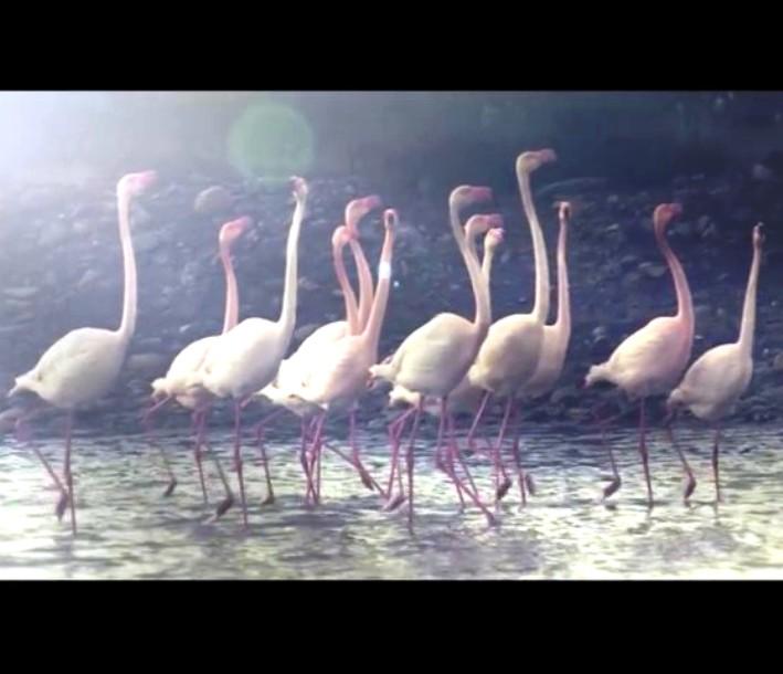 """CAGLIARI, Spot promozionale """"Cagliari, the life you want"""" premiato al Key Award di Milano (VIDEO)"""