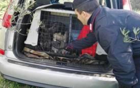 TALANA, Ritrovata l'auto rubata ai cacciatori coi cani a bordo