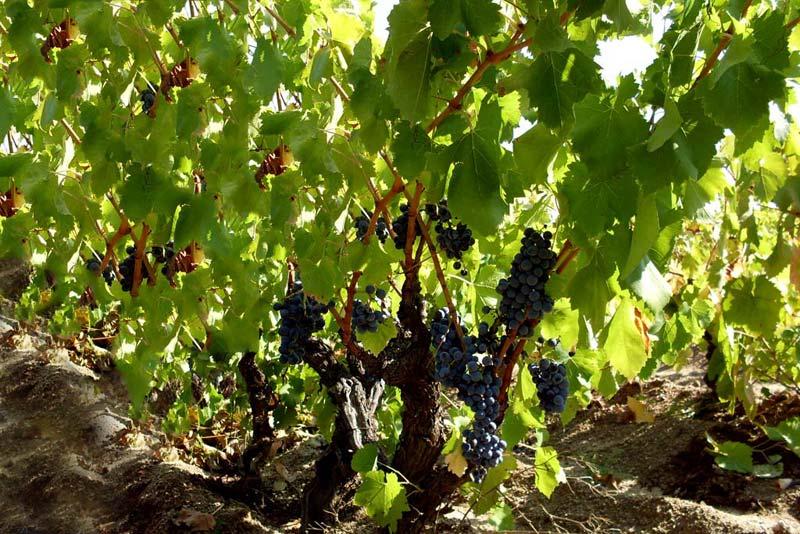 I Sardi non sanno difendere il proprio vino (Romano Satolli – Unione Consumatori)