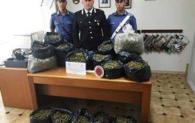 ORUNE, 50 chili di marijuana stesa sul pavimento di casa per essiccare: arrestata una coppia