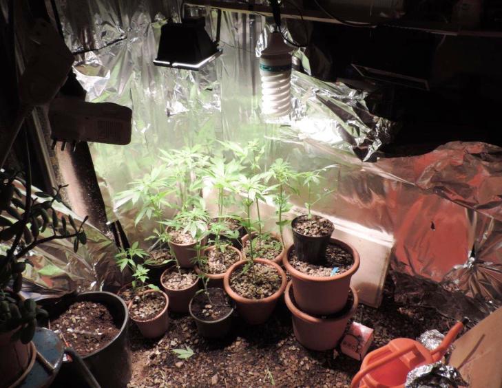 MASAINAS, Arrestato un 43enne che coltivava in casa quindici piante di canapa indiana