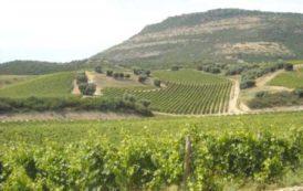"""SULCIS, Gelata mette a rischio il Carignano. Locci (FI): """"Aiutiamo i viticoltori"""""""