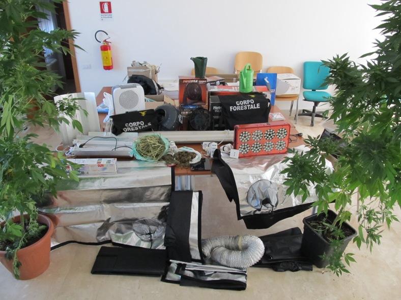 PULA, Un arresto per coltivazione, detenzione e lavorazione di sostanze stupefacenti ai fini di spaccio