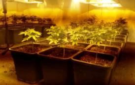 QUARTU SANT'ELENA, Arrestato un coltivatore di marijuana: serra con 40 piante