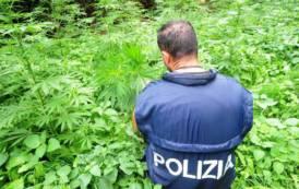 OLIENA, Terza piantagione di marijuana scoperta in 30 giorni: arrestato un 26enne