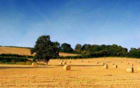 BORORE, Terminata la raccolta di foraggio per gli allevatori danneggiati dall'incendio