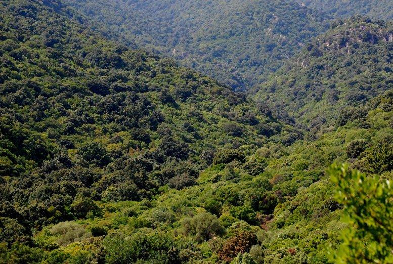 """REGIONE, Locci (FI): """"Ente Foreste utilizza soldi dei Sardi per organizzare convegni inutili"""""""