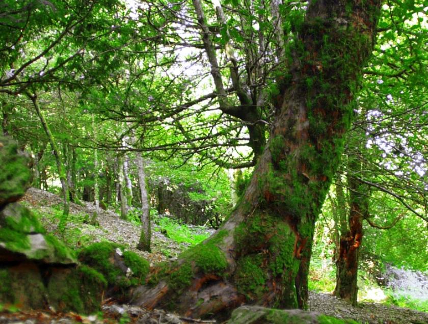 COCHISE, L'inefficienza regionale penalizza anche l'Ente Foreste