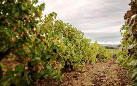 """ATZARA, Savoldo (Fradiles): """"Utilizzare vitigni autoctoni e una doc di qualità sono punti di forza"""""""