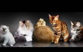 """MACOMER, Domenica 18 """"Cane e gatto chi l'ha detto che non si può"""": mostra e convegno veterinario"""