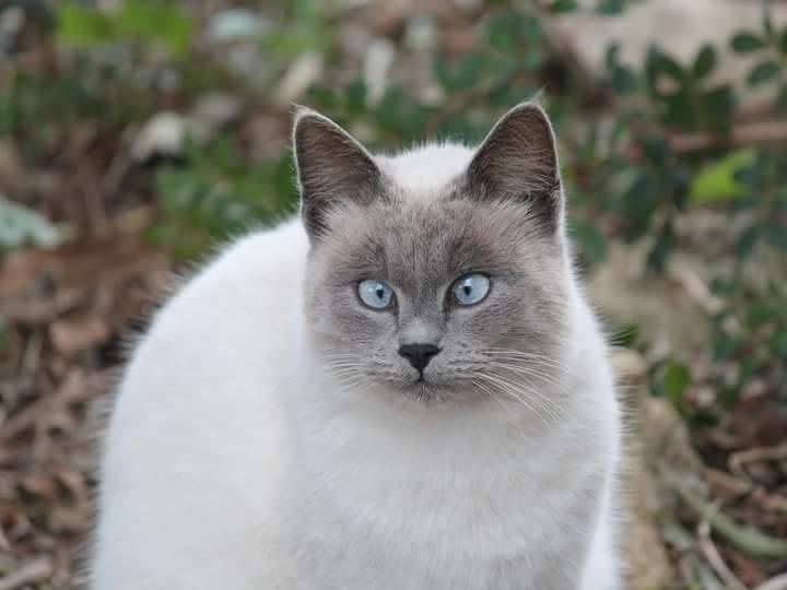gatto_colonia