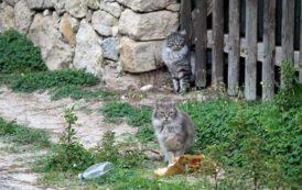 #tettepercrocchette: un hashtag per salvare la colonia felina di San Vero Milis (Daniela Pintor)