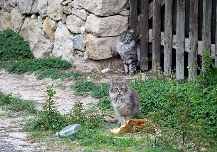 gatto_colonia2