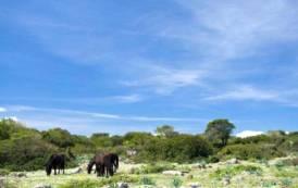 AMBIENTE, Stanziati 150.000 euro per i cavallini della Giara di Gesturi