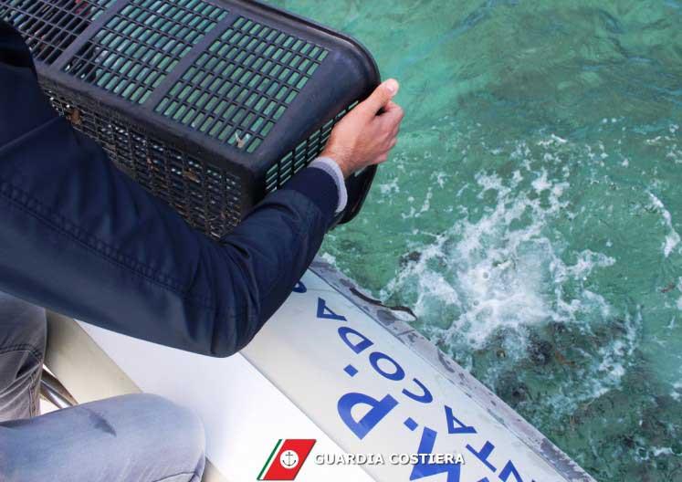 TAVOLARA, Recuperati 400 ricci pescati abusivamente nell'Area Marina Protetta (VIDEO)