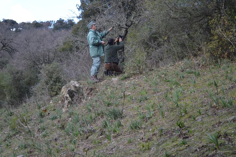BULTEI, Foto-trappole per individuare l'animale che ha attaccato gli ovini. Forse una pantera