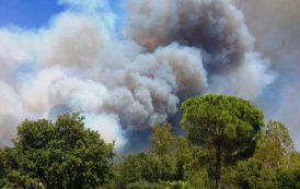 """ANTINCENDIO, In via di bonifica l'incendio a Pula. Tocco (FI): """"Sardegna in mano agli incendiari"""""""
