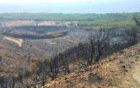 PULA, Le IMMAGINI dei danni causati dall'incendio a Santa Margherita