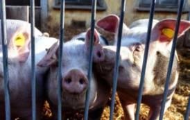 PASTORIZIA, Alla Camera 'maratona' di interventi dei deputati di FdI per chiedere fine embargo delle carni suine sarde