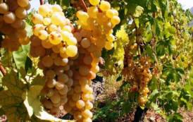 IL GIARDINIERE, Sardegna era patria del vino nel Mediterraneo: valorizziamo turisticamente queste ricchezze