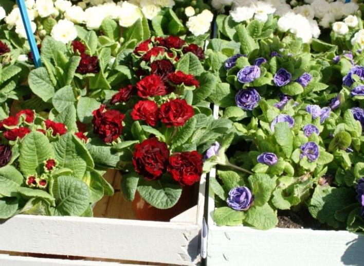 """MILIS, Fine settimana tra i fiori con """"Primavera in Giardino"""""""