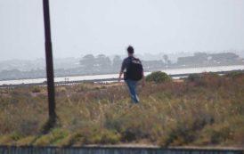 A Molentargius passeggiare in mezzo ai nidi si può… (Stefano Deliperi – Gruppo d'intervento giuridico)