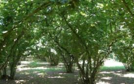 AGRICOLTURA, Progetto Nocciola Italia: un'opportunità di sviluppo agricolo per tutta la Barbagia-Mandrolisai