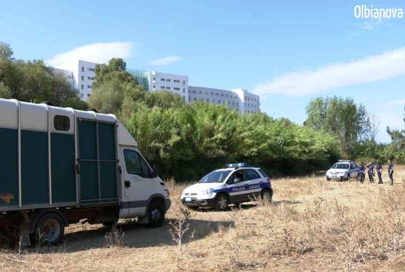 OLBIA, Comune si riprende aree destinate ai parcheggi del Mater Olbia: sfrattati due asinelli