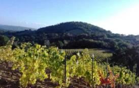 Il vino sardo dà un mucchio di soddisfazioni anche linguistiche (Camillo Langone)