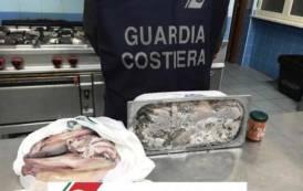 OLBIA, Sequestrati 1.400 chili di prodotto ittico e sanzioni amministrative per 43mila euro