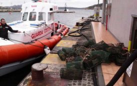 PESCA, Controlli nel nord Sardegna: sanzioni per 8.000 euro e 200 chili di ricci sequestrati