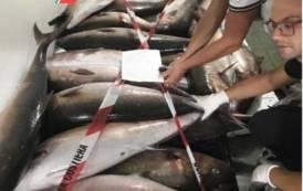 SINISCOLA, Non registra il pescato sul giornale di pesca elettronico: sequestrati 800 chili di prodotto ittico