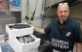 GALLURA, Controllo su filiera della pesca: sanzionati esercizi commerciali e sequestrati 80 chili di pescato