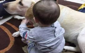 GUSPINI, Il labrador Pitta protagonista del successo della Pet Teraphy con i bambini di Casa Ruth