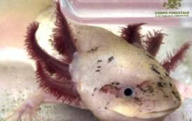 AMBIENTE, Trovati a Cagliari due esemplari di animali in via di estinzione provenienti dal Messico